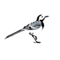 Wagtail Design